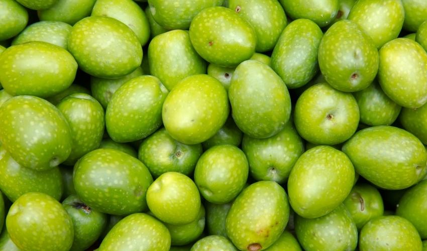 img olive verdi-01 - Frantoi Saalga